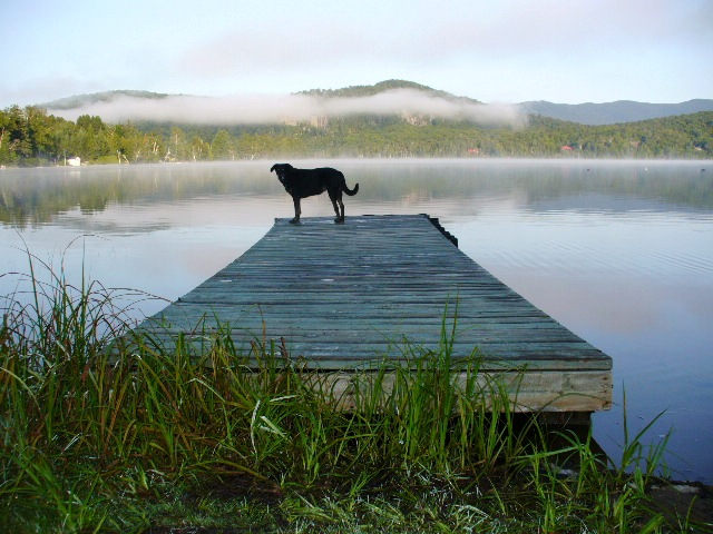 Dog standing at the end of the dock